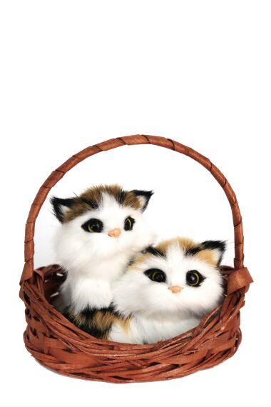 Katt i Korg