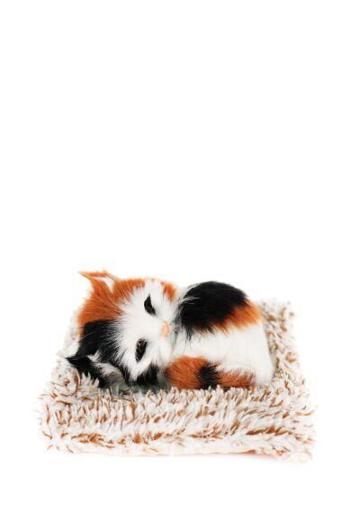 Katt Liggande