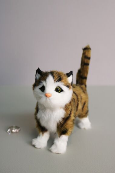 Katt Stående