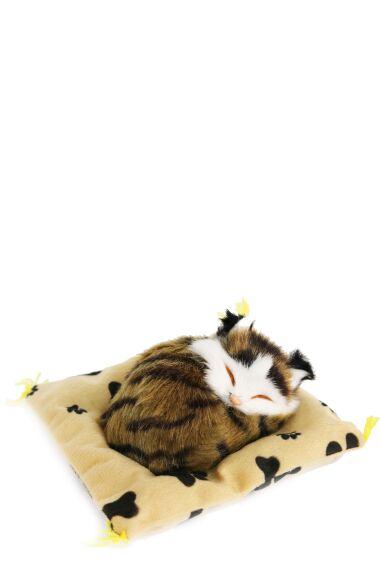 Katt Sovande