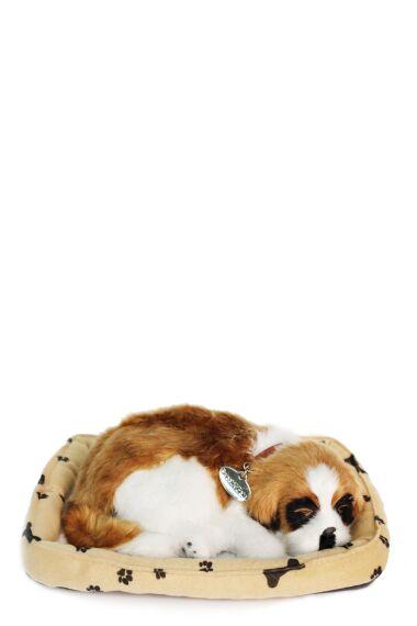 Hund Viftar med Svans och Låter