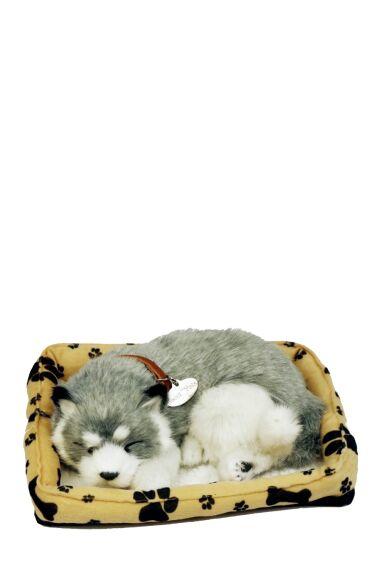 Hund Sovande Viftar med Svans Och Låter