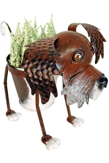 Blomkruka Hund