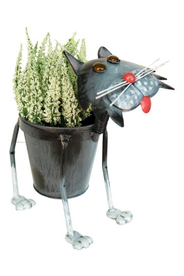 Blomkruka Katt