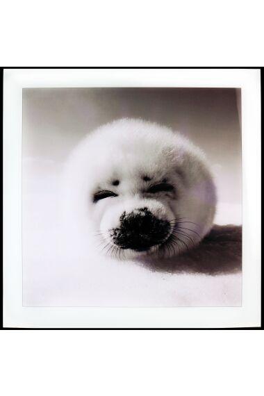 Tavla i Glas Baby Seal