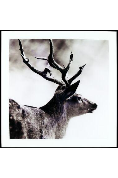 Tavla i Glas Deer