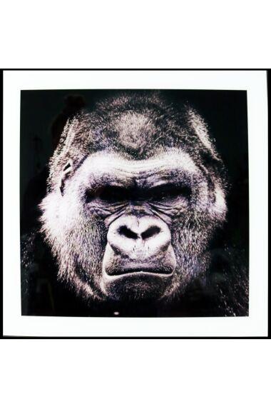 Tavla i Glas Gorilla